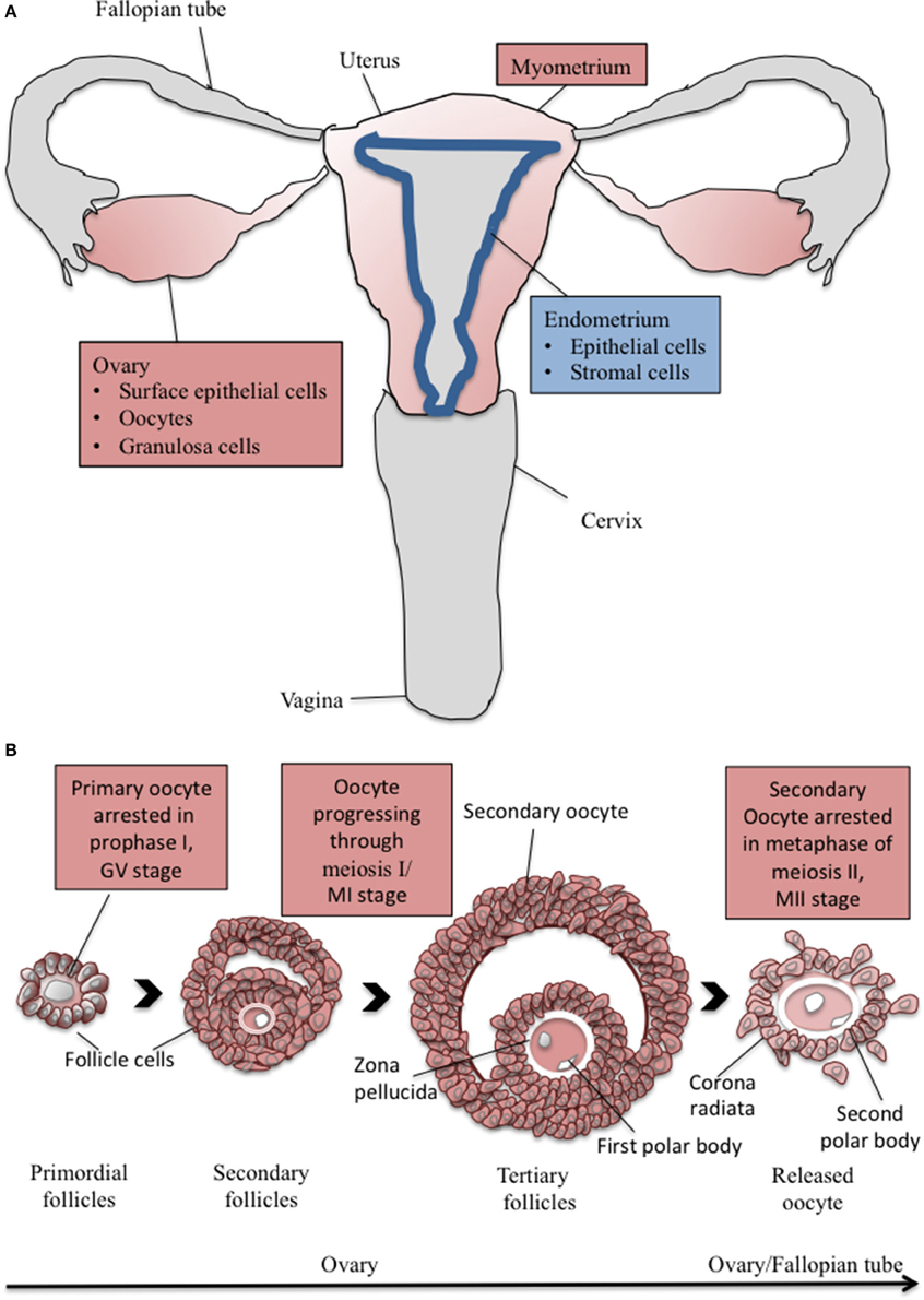 Frontiers | The Calcium-Sensing Receptor and the ...  Frontiers | The...