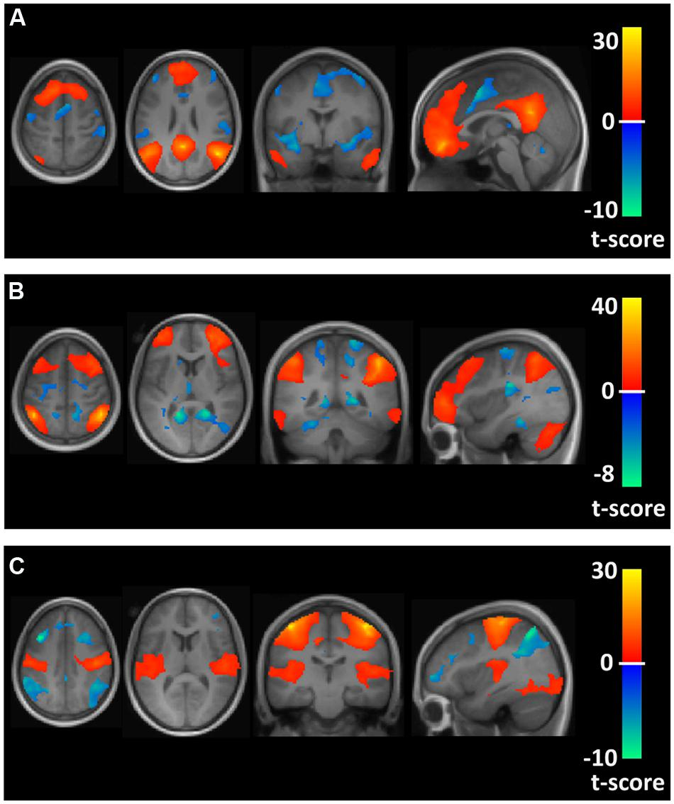 Frontiers | Differences in Resting State Functional