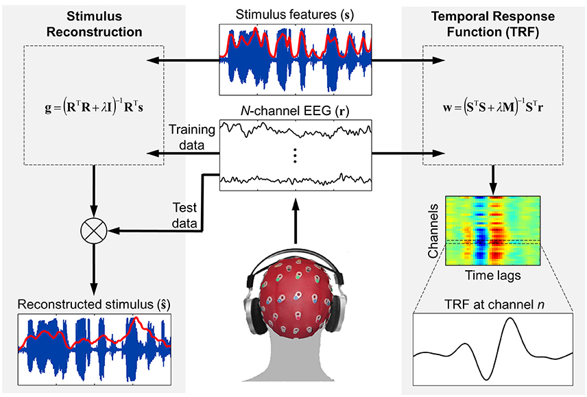 Frontiers | The Multivariate Temporal Response Function (mTRF