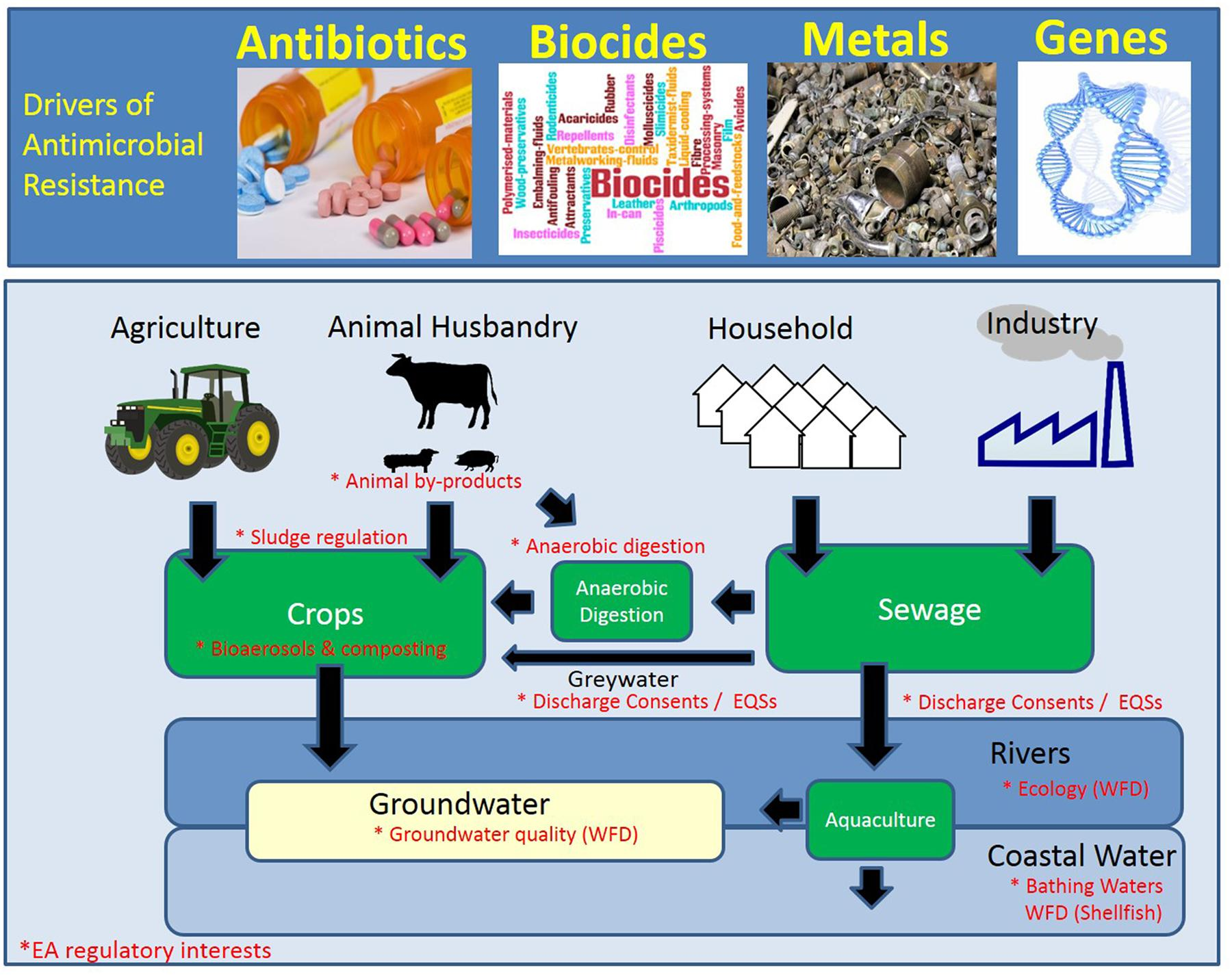 Exposure To Antimicrobials During >> Frontiers Review Of Antimicrobial Resistance In The