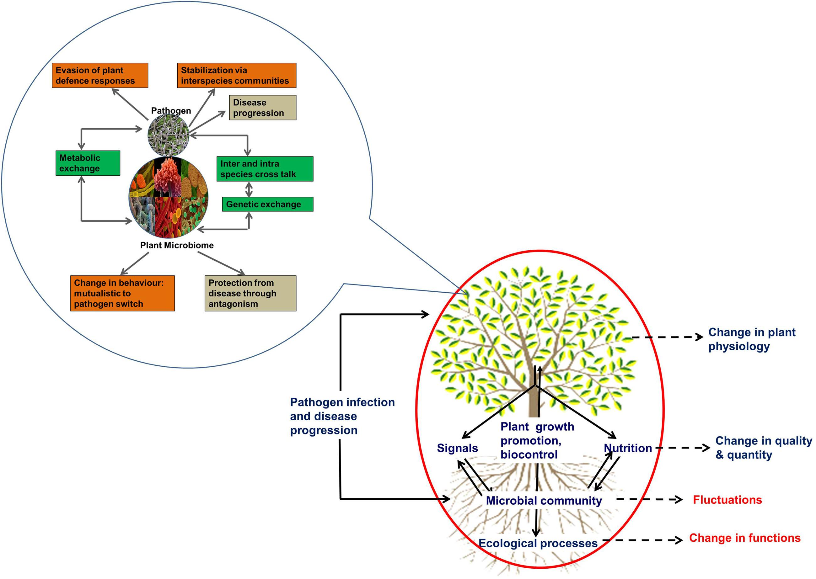 effects of host and vector diversity on disease dynamics Because the effects of diversity on multi-host disease systems have been the subject of much  asymmetric disease dynamics in multihost.