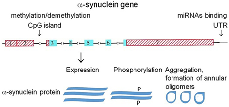 Frontiers | Pore-Forming Proteins as Mediators of Novel