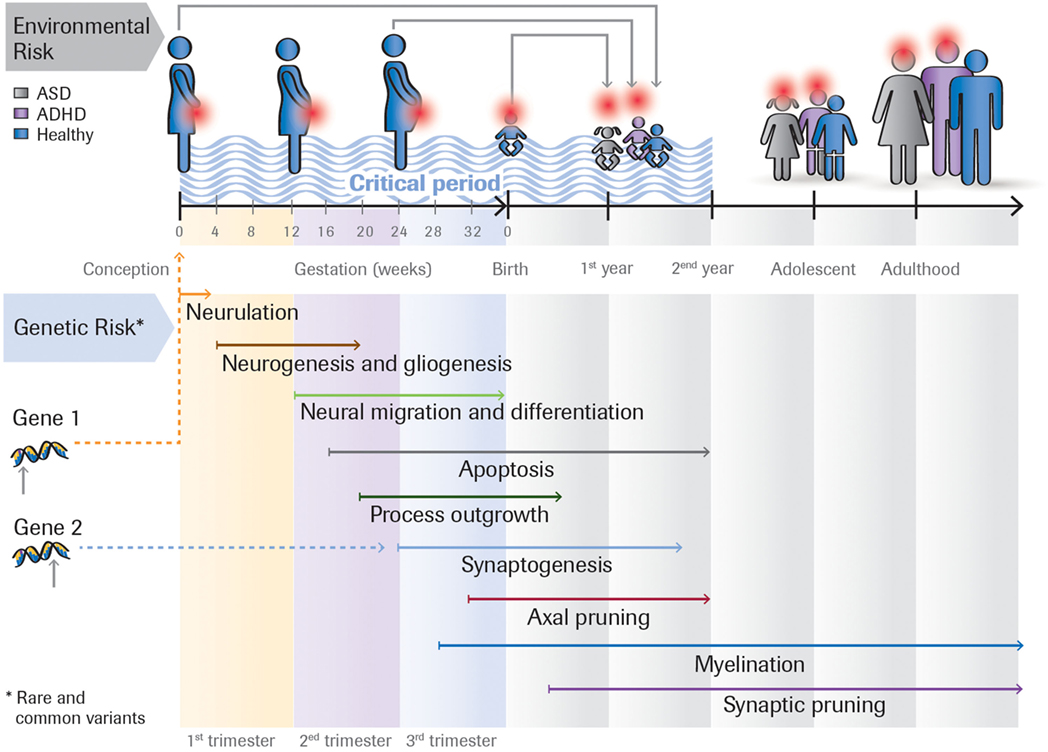 Frontiers | Defining Precision Medicine Approaches to Autism ...