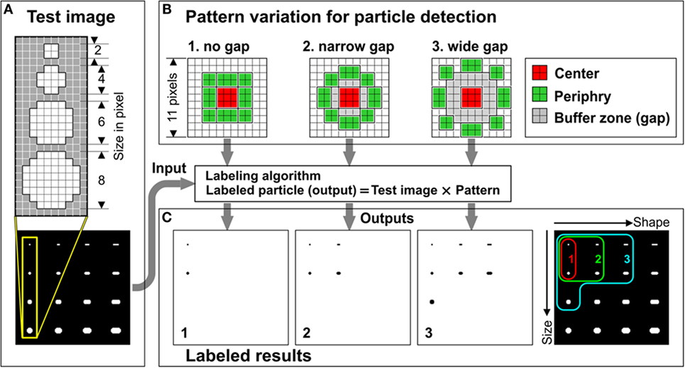 Frontiers | Quantification of Calcified Particles in Human