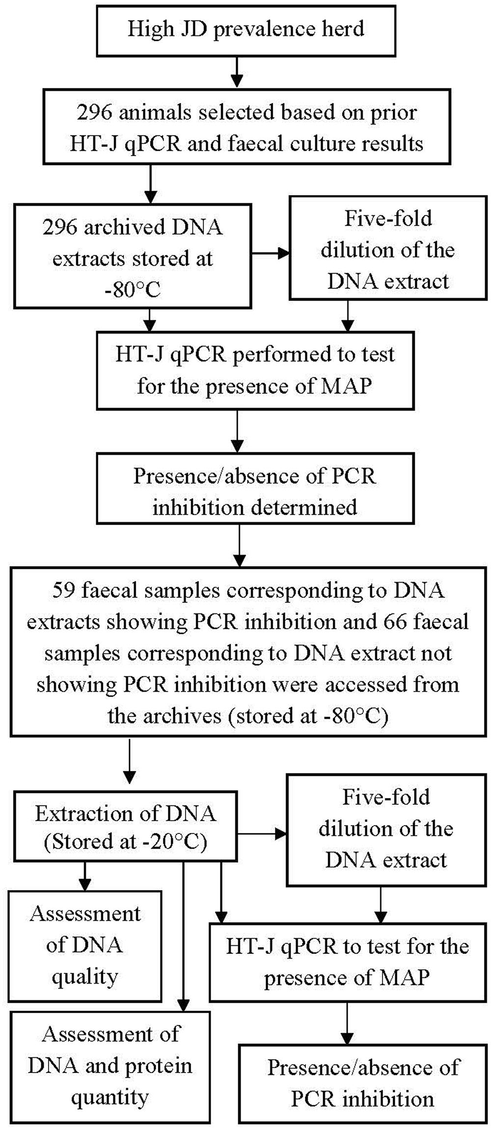 Frontiers   PCR Inhibition of a Quantitative PCR for Detection of ...