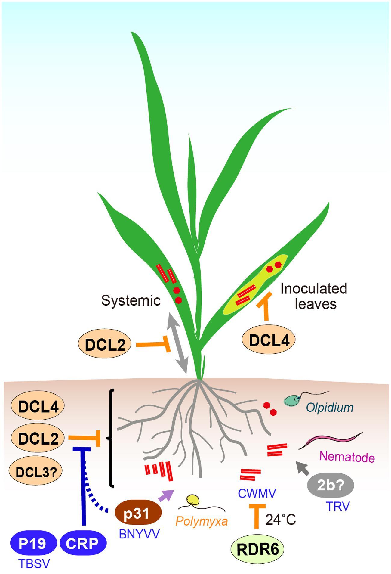 Matthews Plant Virology Pdf