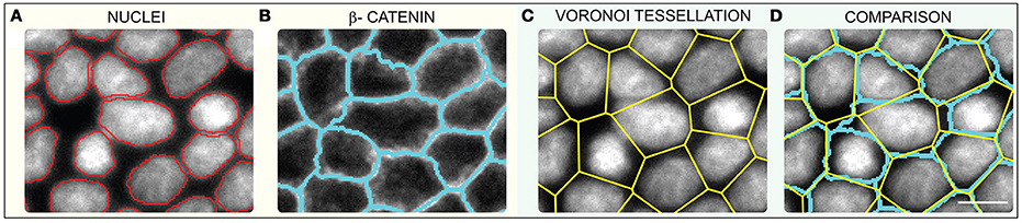 Frontiers | Limits of Applicability of the Voronoi