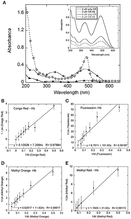 Frontiers   A Study of the Interaction of Bovine Hemoglobin with