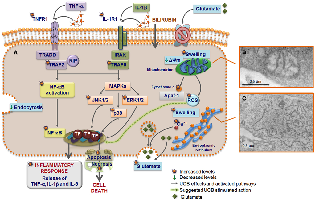 frontiers | the evolving landscape of neurotoxicity by, Skeleton