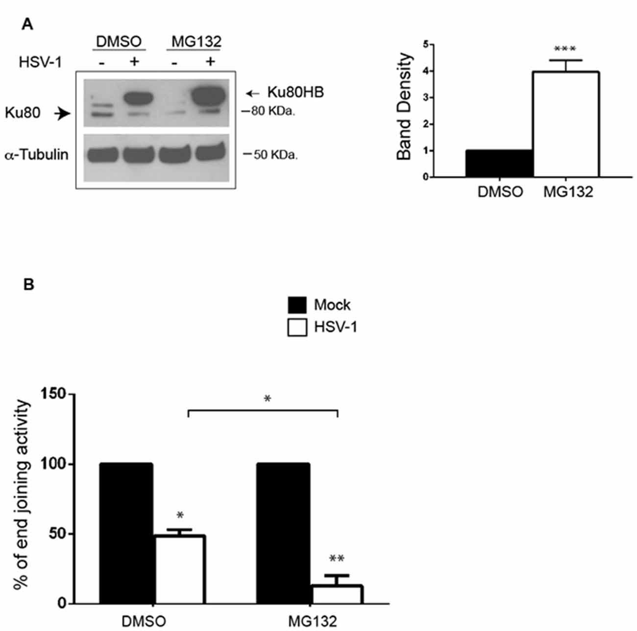 Frontiers | Herpes Simplex Virus-Type1 (HSV-1) Impairs DNA Repair in