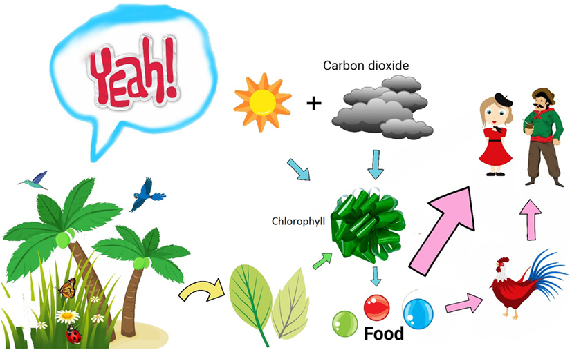 Figure 1 - A simplified view of how plants produce food for us.