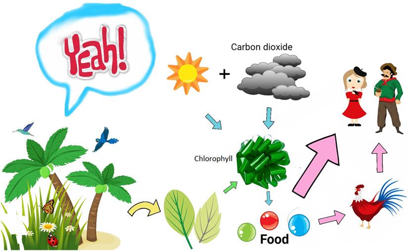 איור 1 - מבט פשטני על האופן שבו צמחים מייצרים עבורנו מזון העלים של צמחים ירוקים מכילים כלורופיל, שבולע אור שמש לְשֵׁם ייצור מזון.
