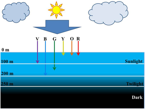 Figure 2 - Penetration of sunlight in oceans.