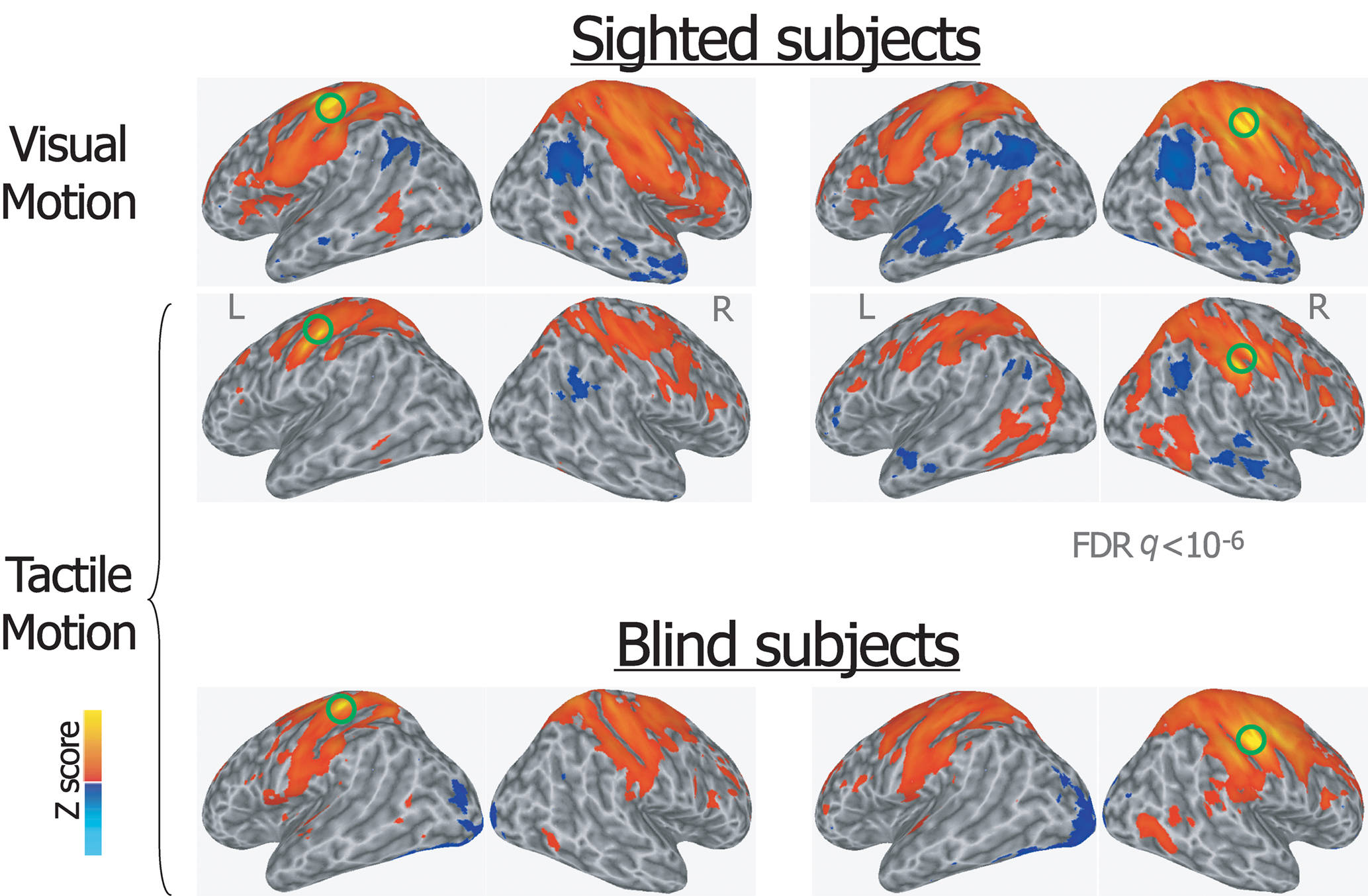 an analysis of the human visual sense Literary analysis: using elements of literature  or thing performing traditionally human activities  though the most immediate forms of imagery are visual,.