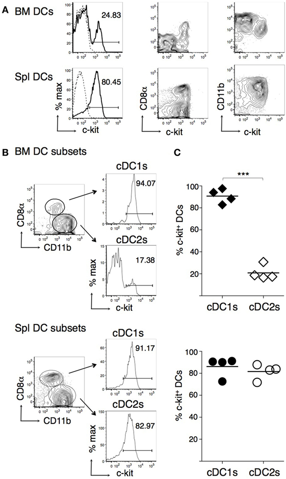 Frontiers Gm Csf Inhibits C Kit And Scf Expression By