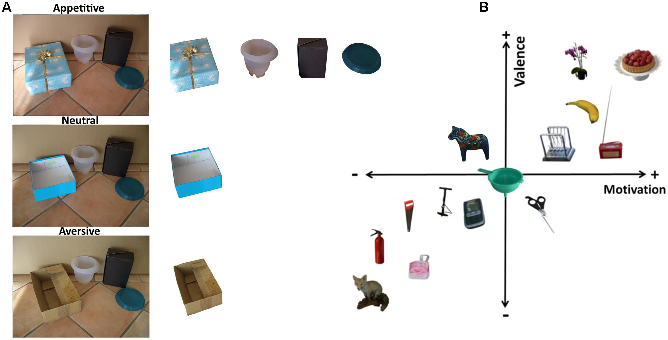 Frontiers | Motivational Objects in Natural Scenes (MONS): A