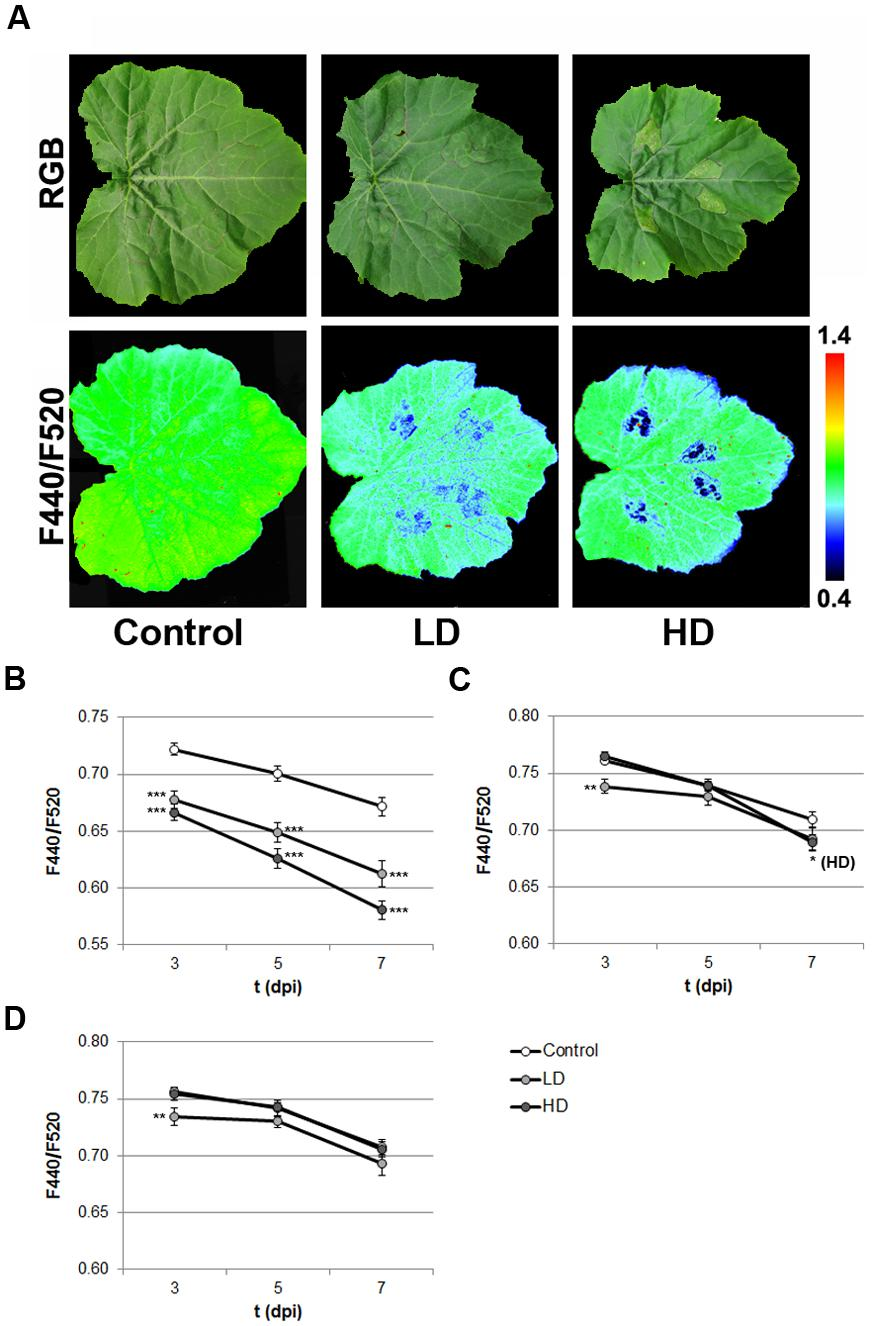 Frontiers | Multicolor Fluorescence Imaging as a Candidate