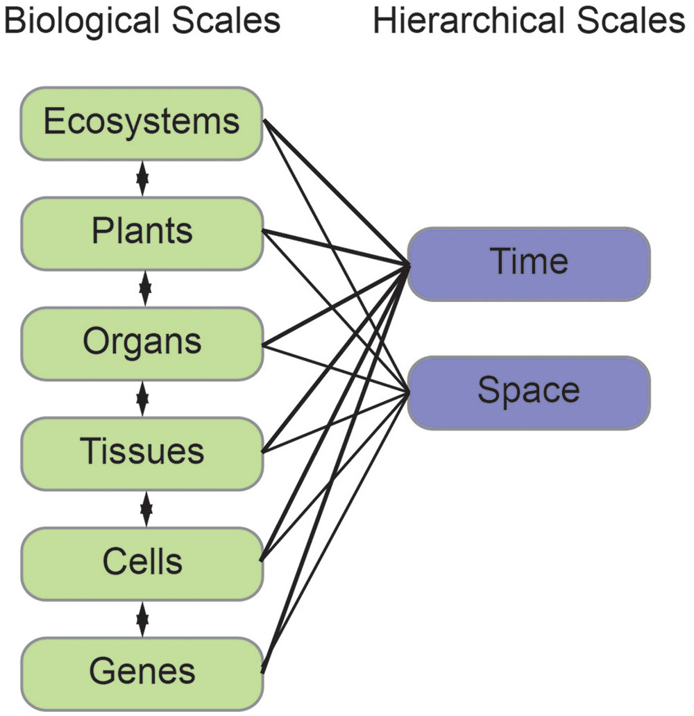 Frontiers Reshaping Plant Biology Qualitative And Quantitative Simple Cell Diagram For Kids Cells