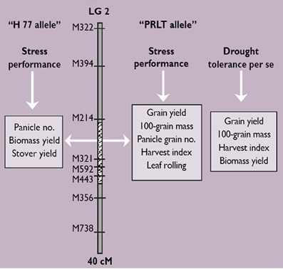 Frontiers | II 1 5 Phenotyping pearl millet for adaptation to