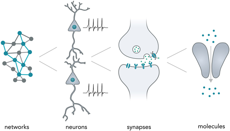 Neuronal Barcodes Shape Complex Networks In The Brain >> Frontiers Interfacing Neural Network Components And Nucleic Acids