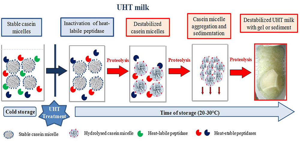 project milk and casein present essay December 20, 2017 | author: aditya athwasiya | category: milk, food and drink, food & wine, chemistry, nature | report this link.