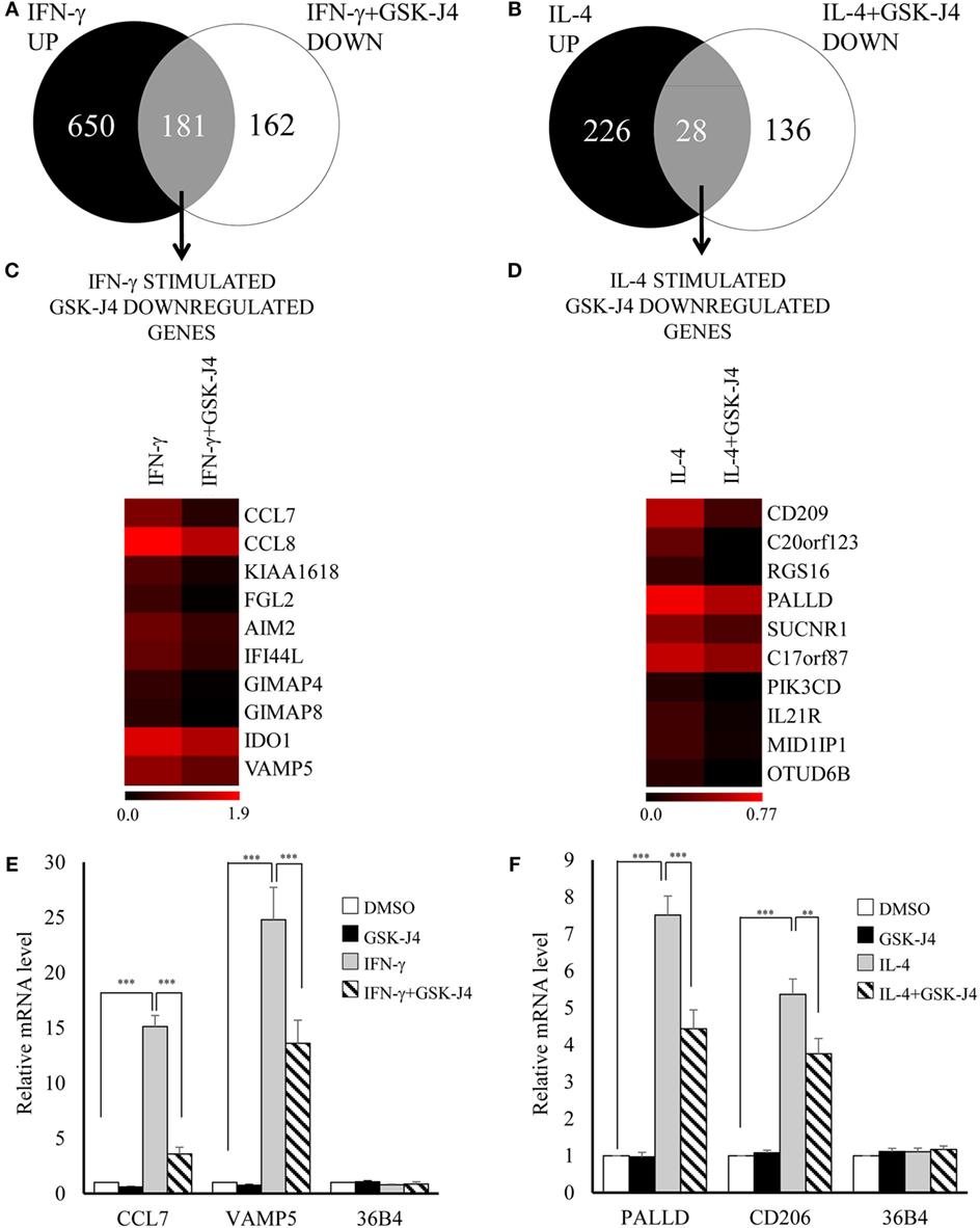 Frontiers regulation of epigenetic modifiers including kdm6b frontiersin pooptronica