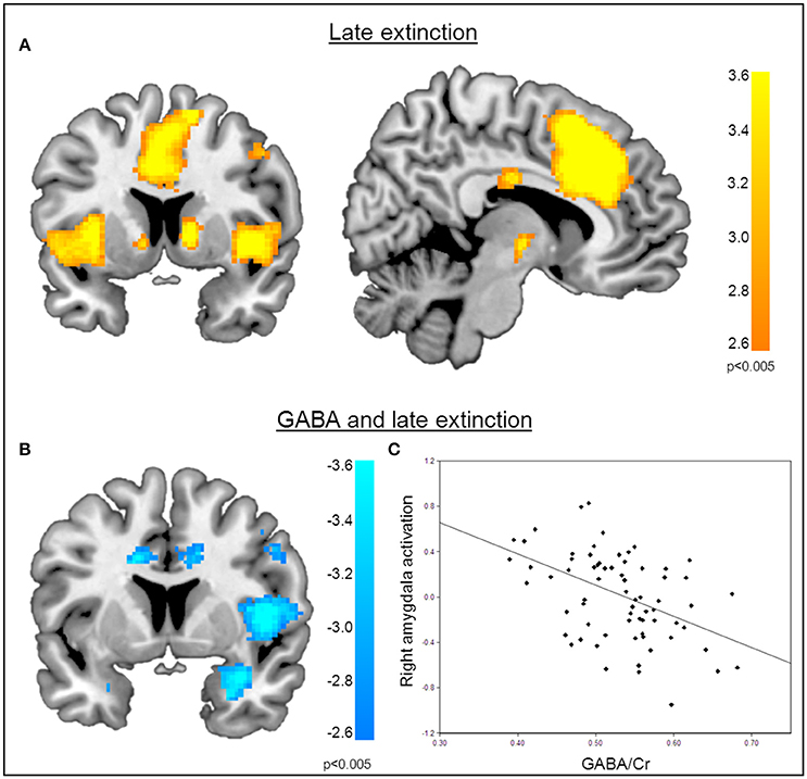 Frontiers | GABA Concentrations in the Anterior Cingulate Cortex Are ...
