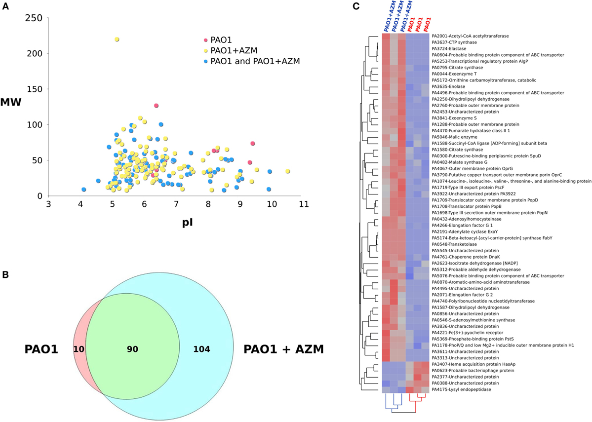 Frontiers azithromycin attenuates pseudomonas induced lung frontiersin pooptronica Image collections
