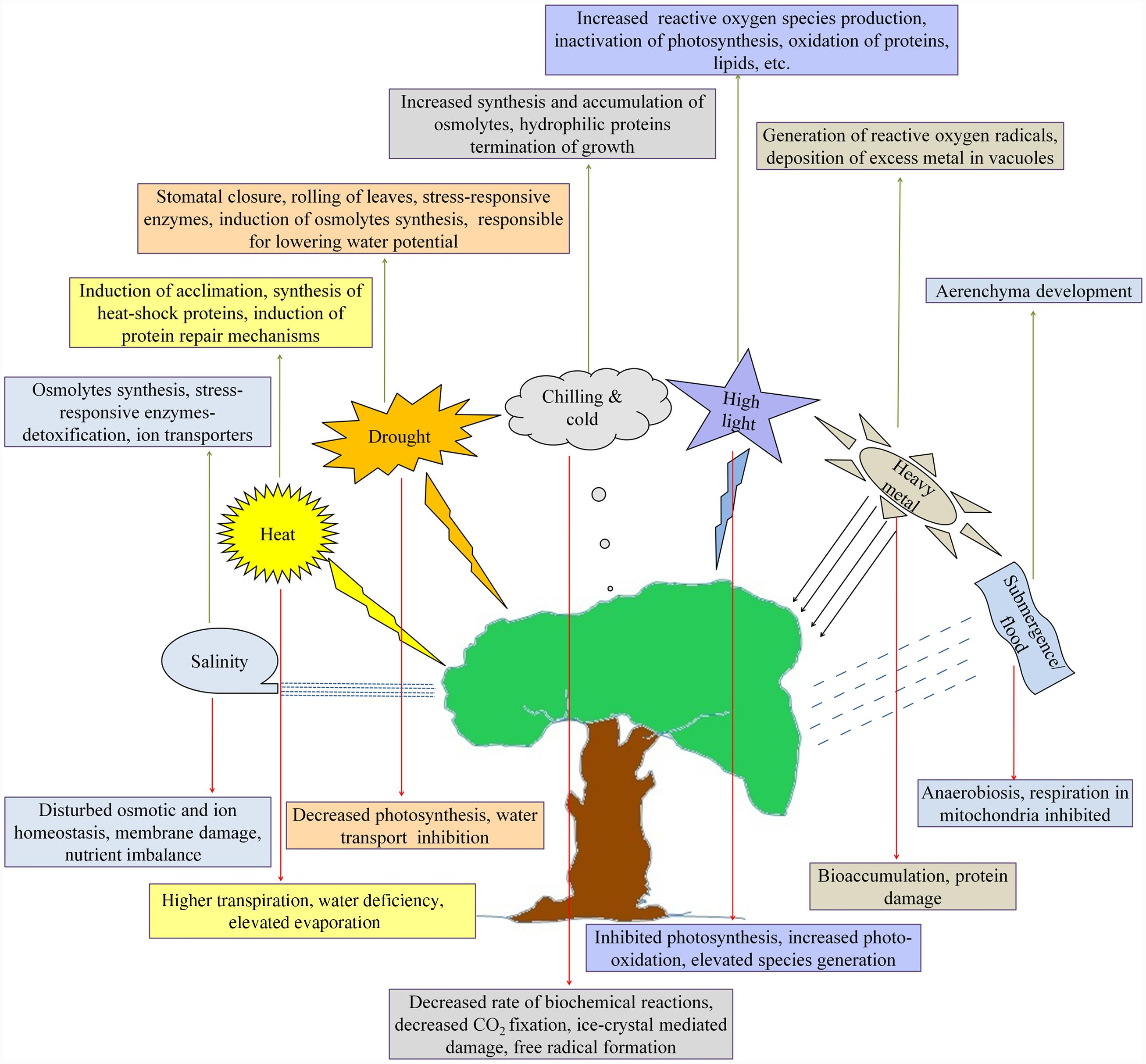 how do abiotic factors influence the rate of photosynthesis How does light intensity and carbon dioxide levels affect photosynthesis rate phaladi  there are several factors that influence  abiotic factors and its.