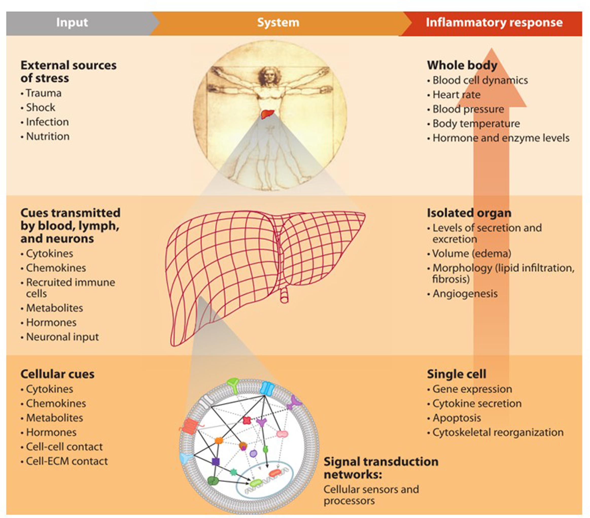 Frontiers | Understanding Physiology in the Continuum: Integration