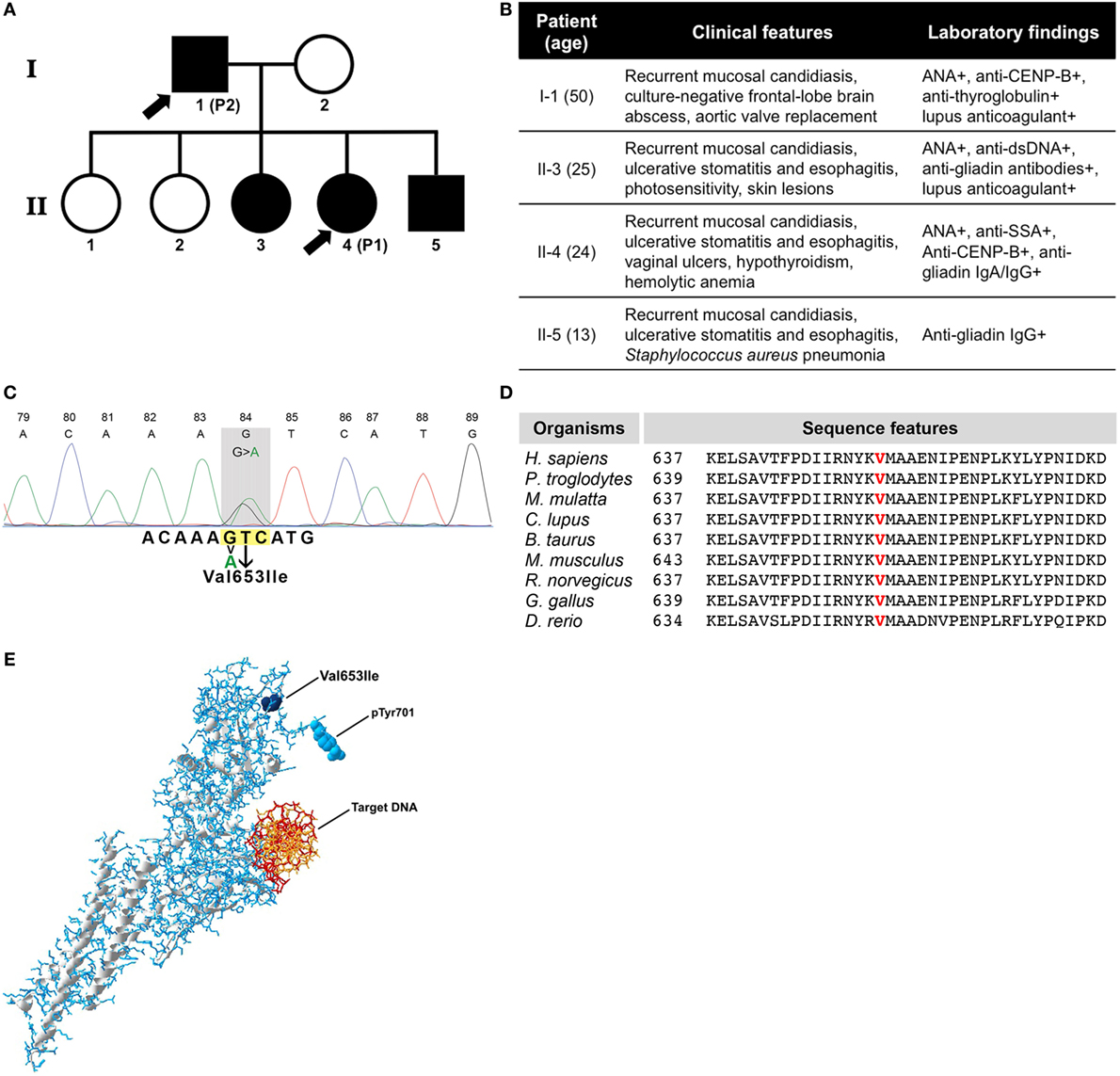 Frontiers | A Novel Heterozygous Mutation in the STAT1 SH2 Domain