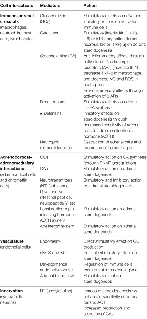 Frontiers | Adrenal Gland Microenvironment and Its