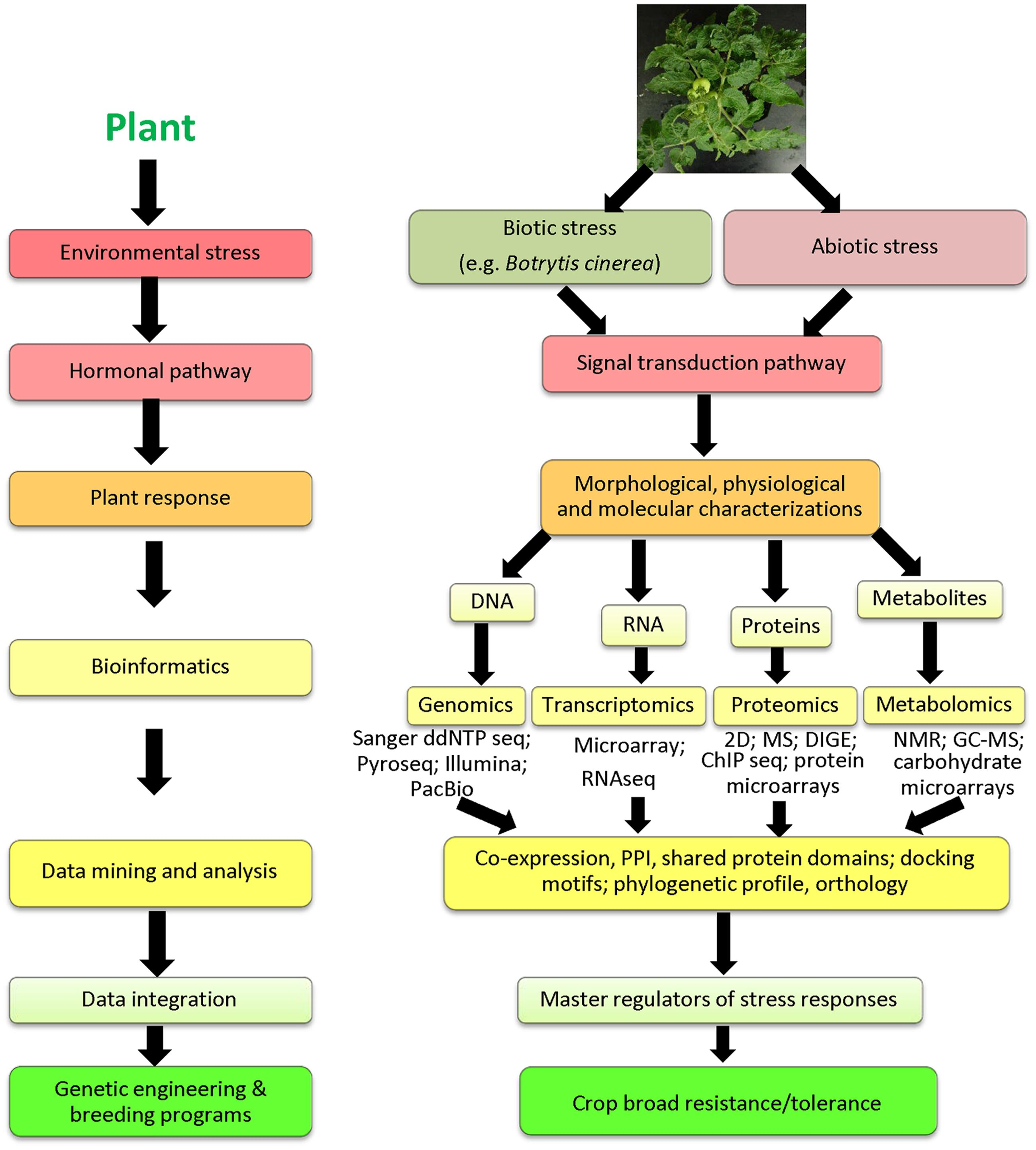 Frontiers Omics And Plant Responses To Botrytis Cinerea Data Sync Engineering Schematics