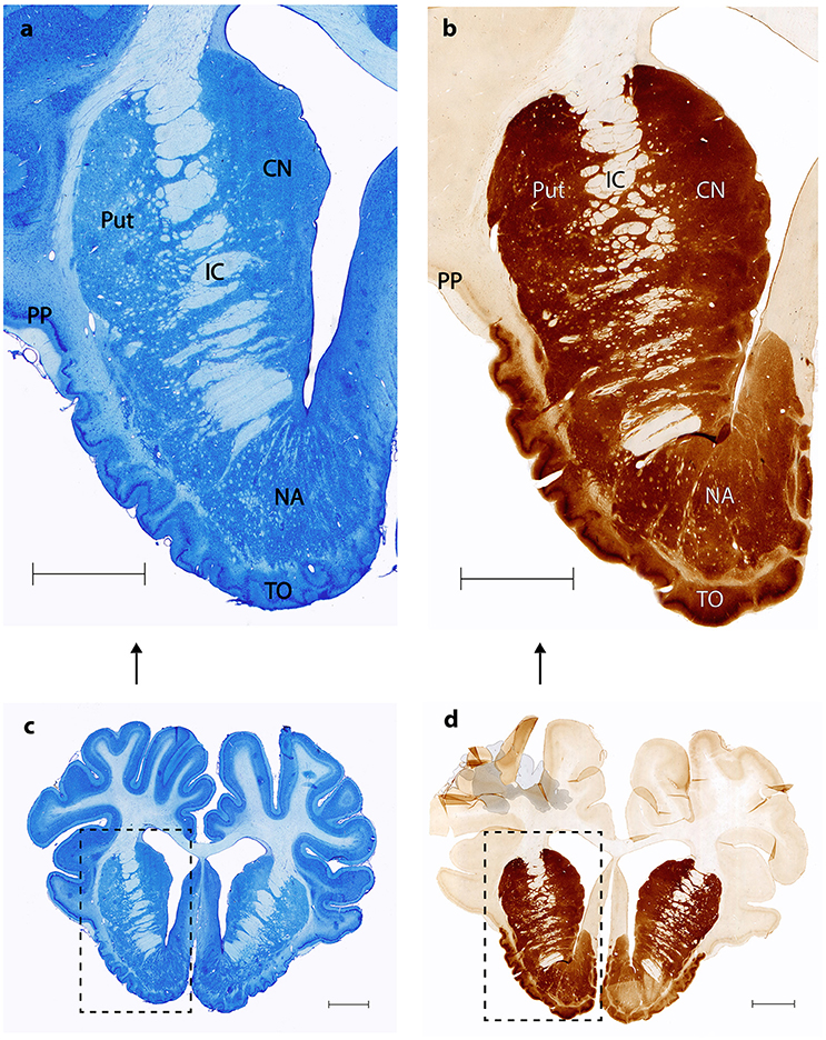 Frontiers | The Retrograde Connections and Anatomical Segregation of ...