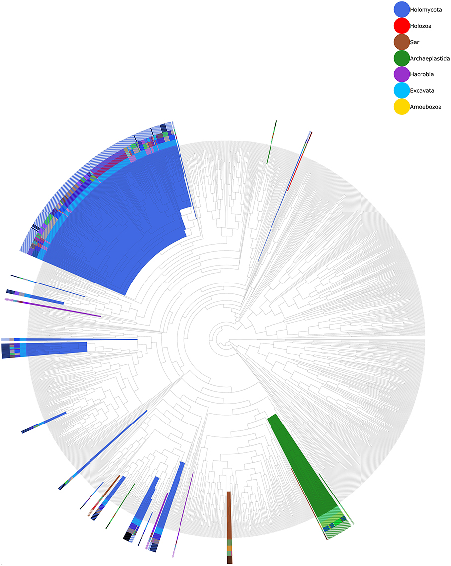 Frontiers Widespread Inter And Intra Domain Horizontal Gene Free Tree Diagram Generator 10159 Download Figure 3 Phylogenetic