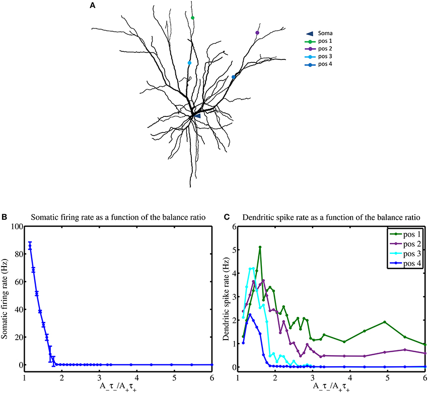 Frontiers | Modulating STDP Balance Impacts the Dendritic