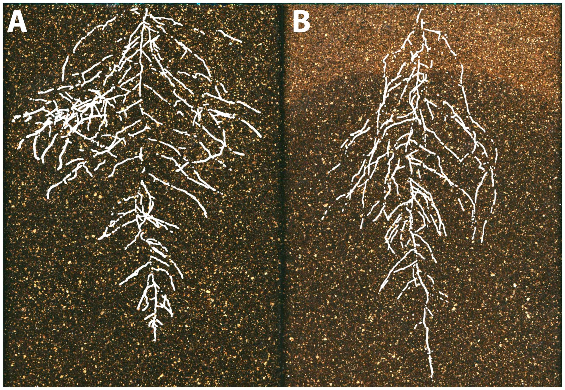 Frontiers | Morphological Plant Modeling: Unleashing Geometric and ...