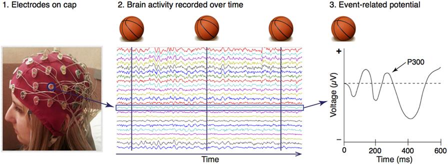 Figure 2 - Recording electroencephalogram (EEG) in humans.