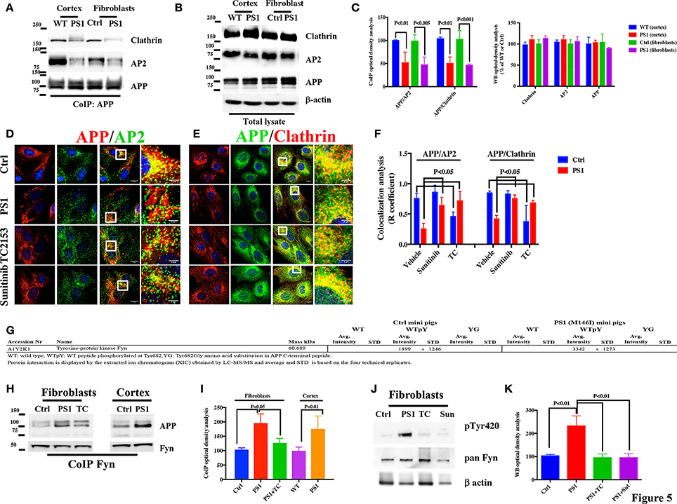 Frontiers | An Aberrant Phosphorylation of Amyloid Precursor Protein