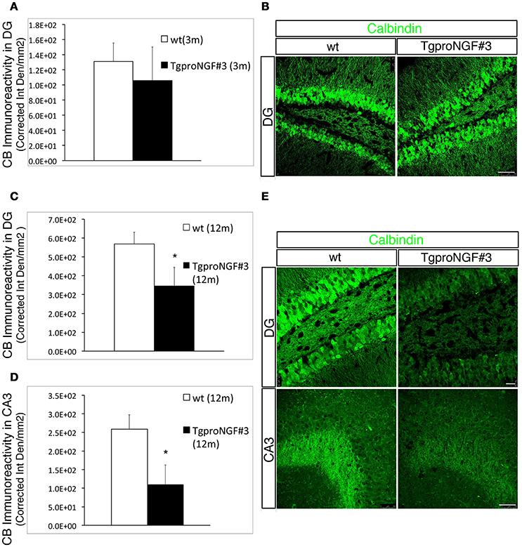 Frontiers | ProNGF Drives Localized and Cell Selective Parvalbumin