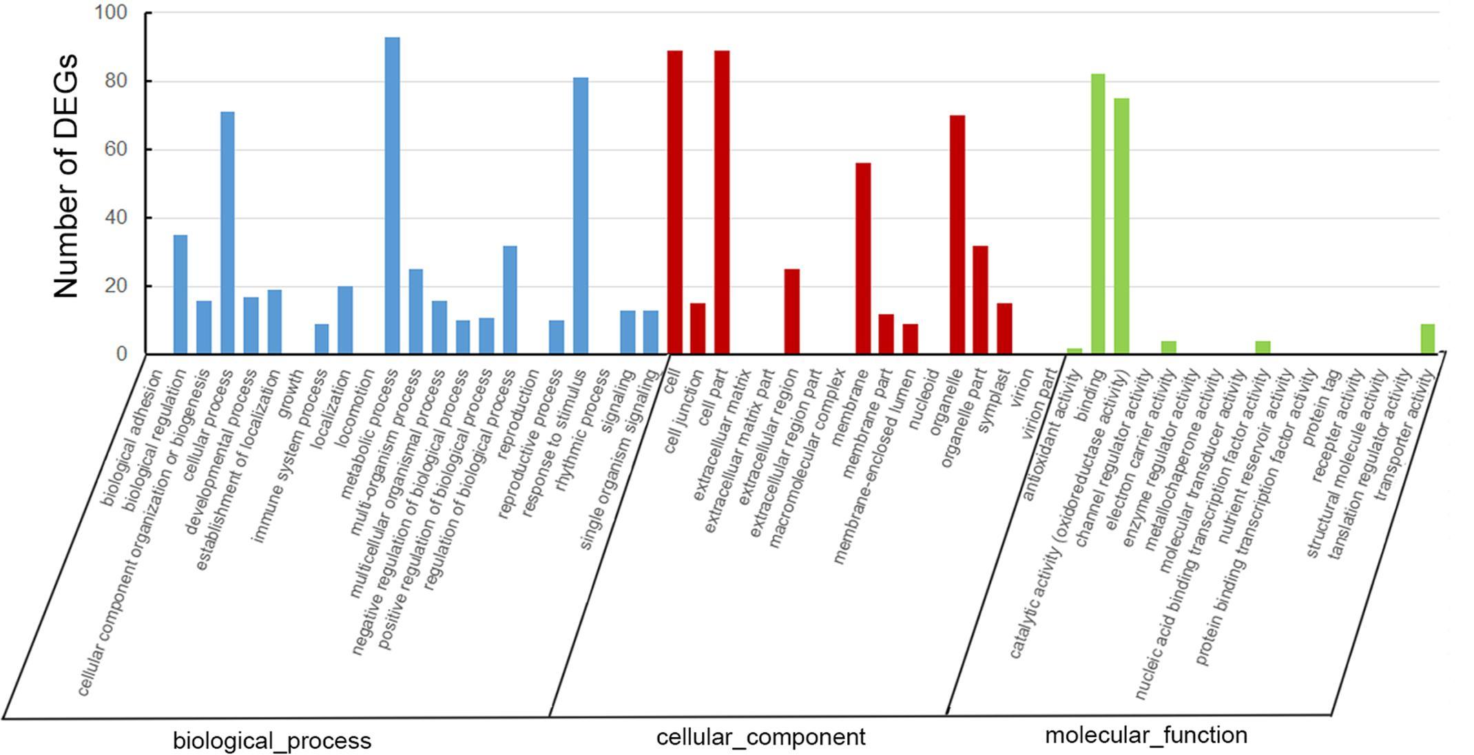 An analysis of ontology