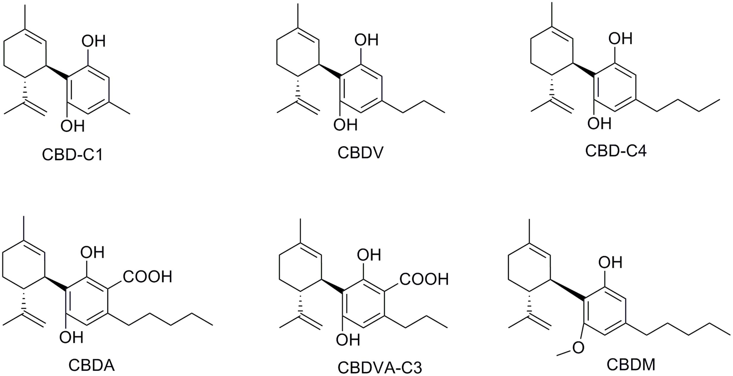 frontiers an overview on medicinal chemistry of synthetic and