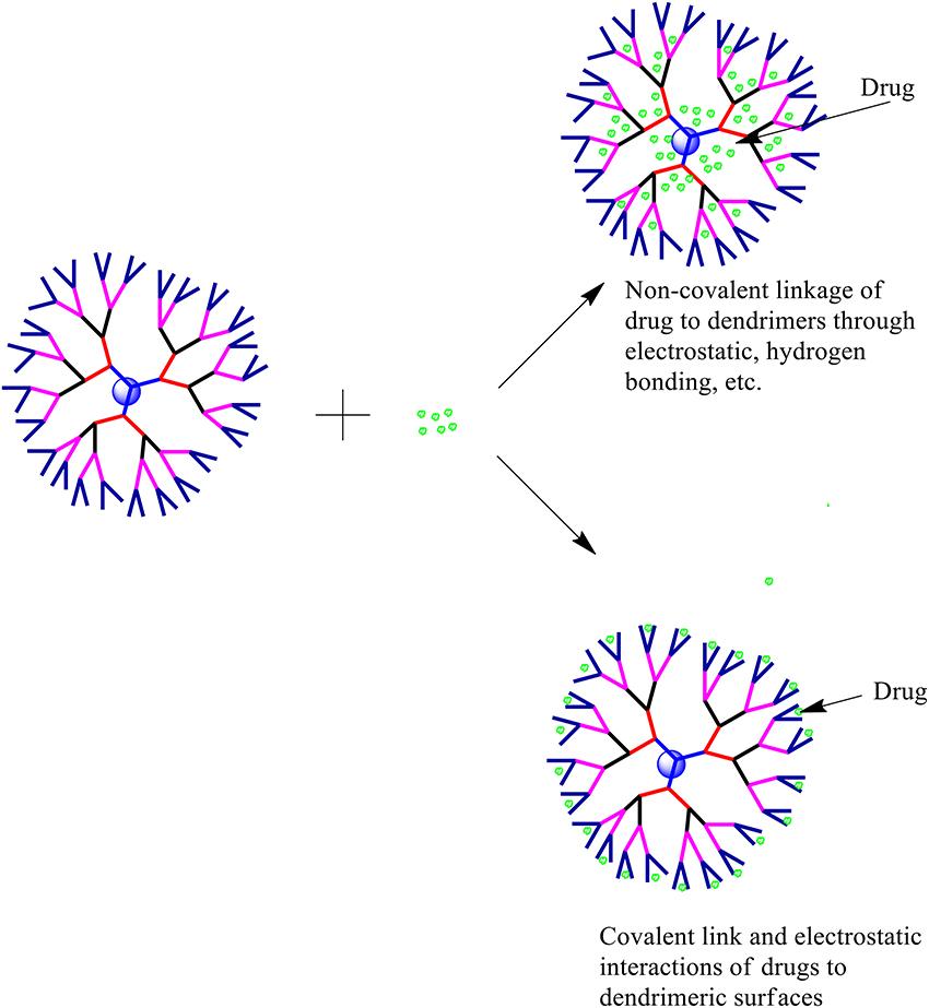 dendrimers in drug delivery pdf
