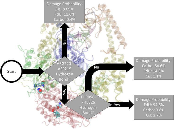 Frontiers | MutSα's Multi-Domain Allosteric Response to Three DNA on