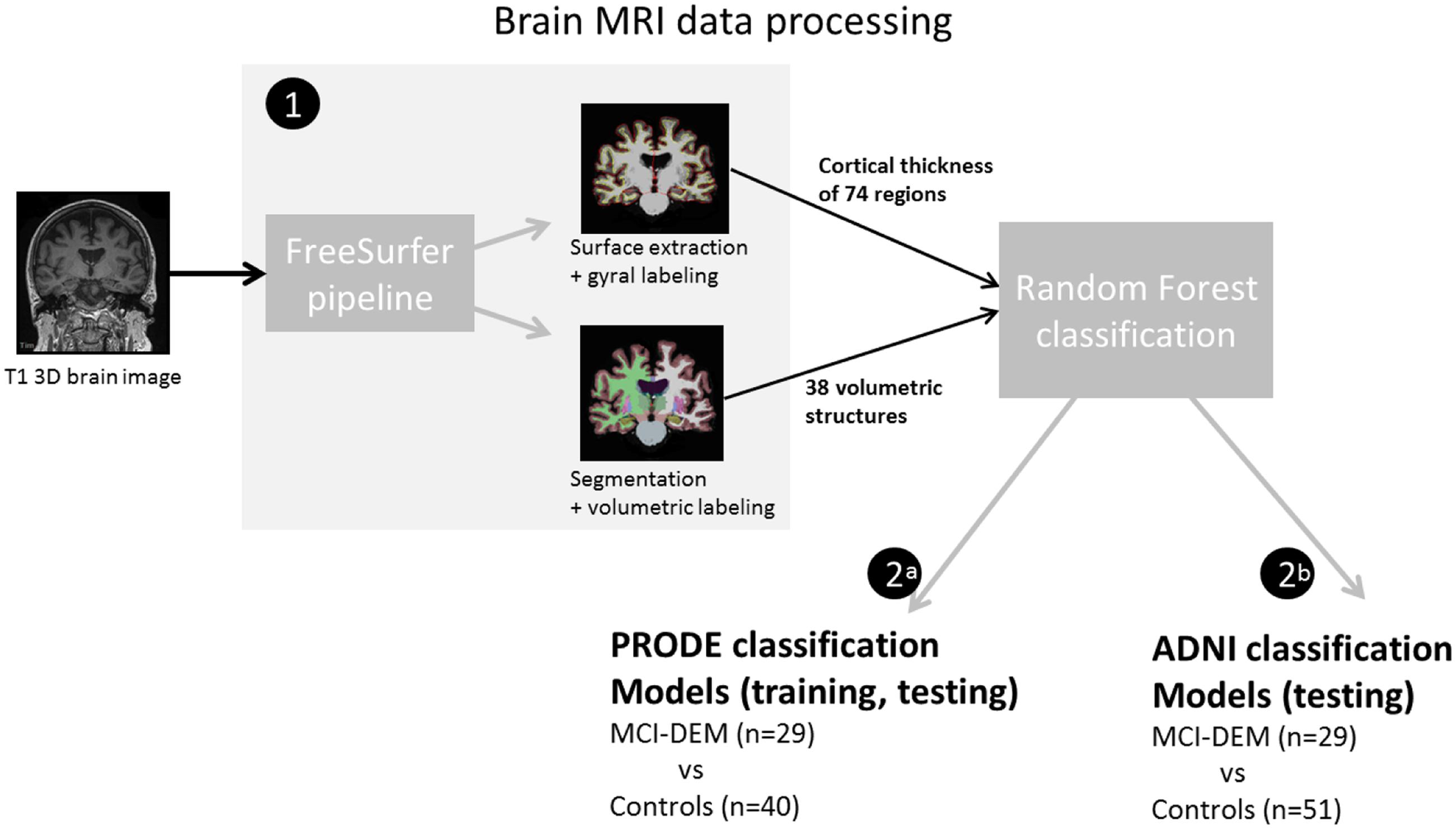 Frontiers | MRI-Based Classification Models in Prediction of