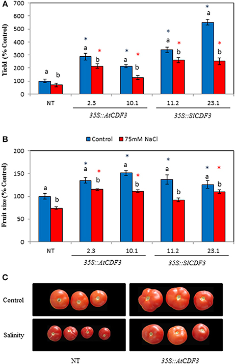 Frontiers | Ectopic Expression of CDF3 Genes in Tomato Enhances