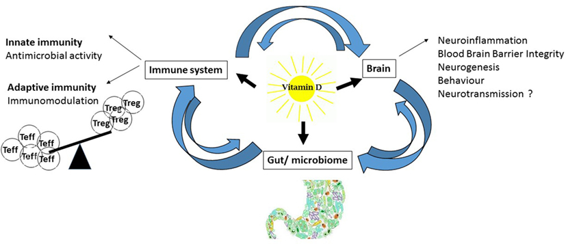 Image result for microbiome vitamin D