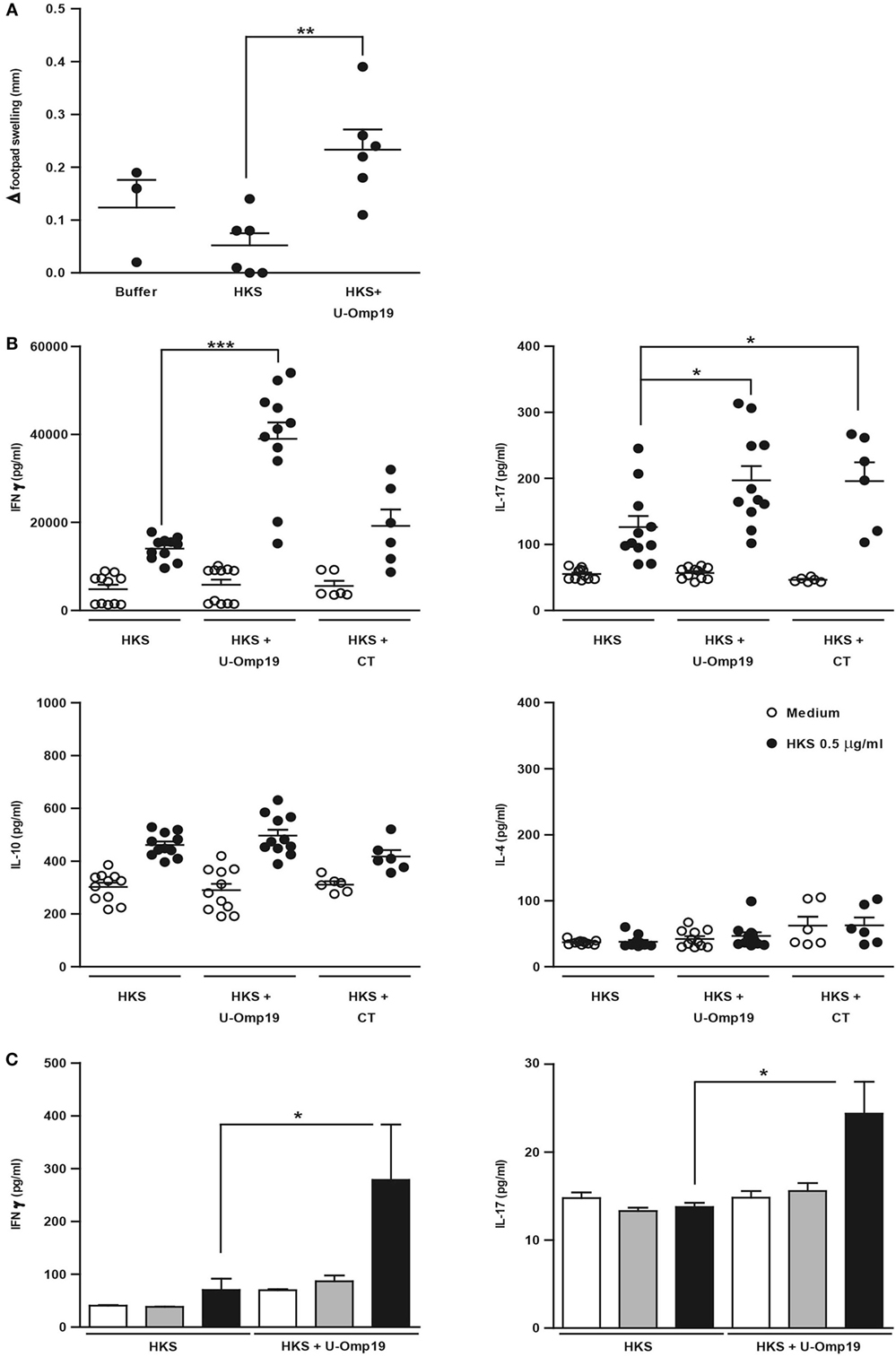 Frontiers | U-Omp19 from Brucella abortus Is a Useful