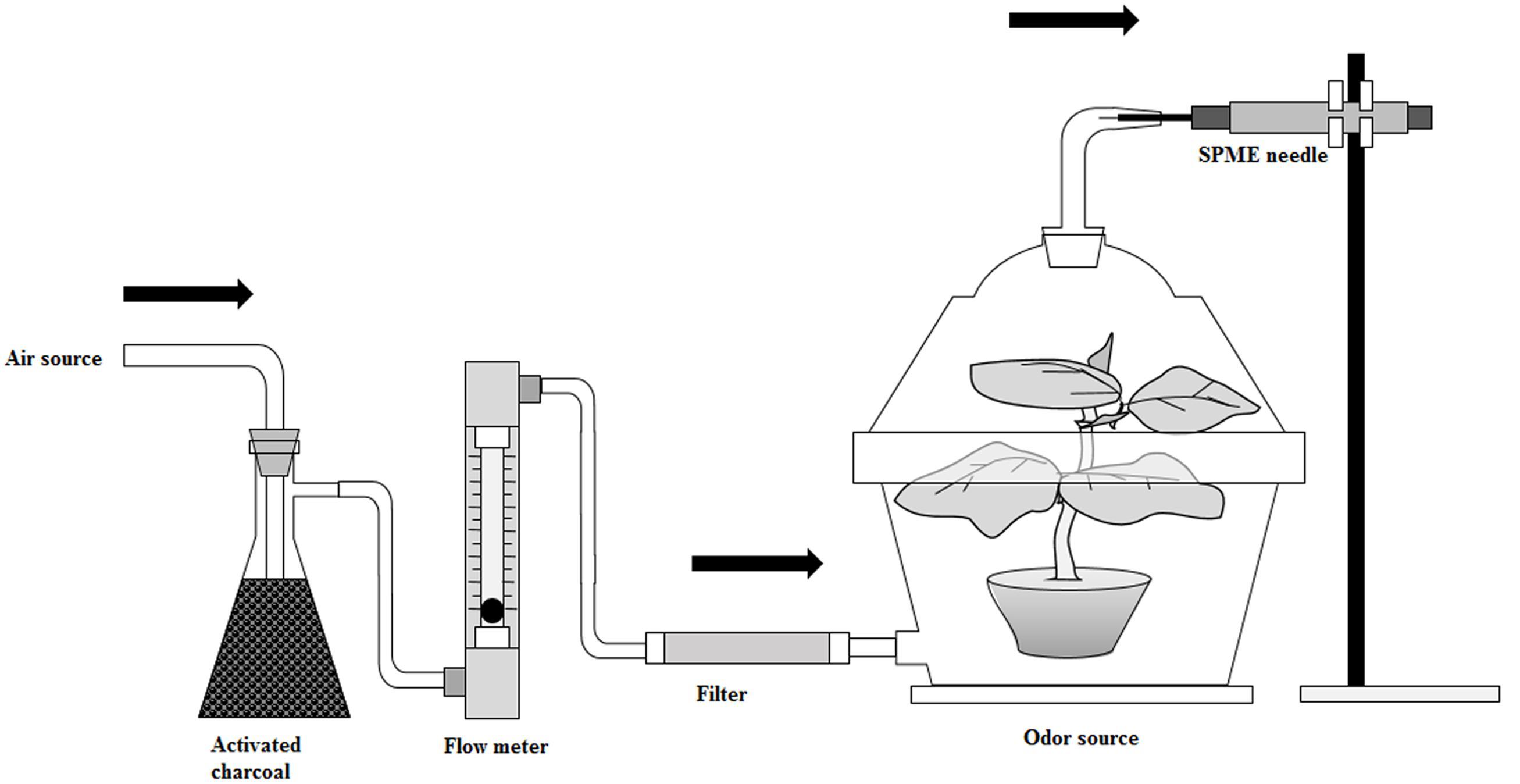 Frontiers High Level Of Nitrogen Makes Tomato Plants Releasing Zkhxwindpowerdiagramgif