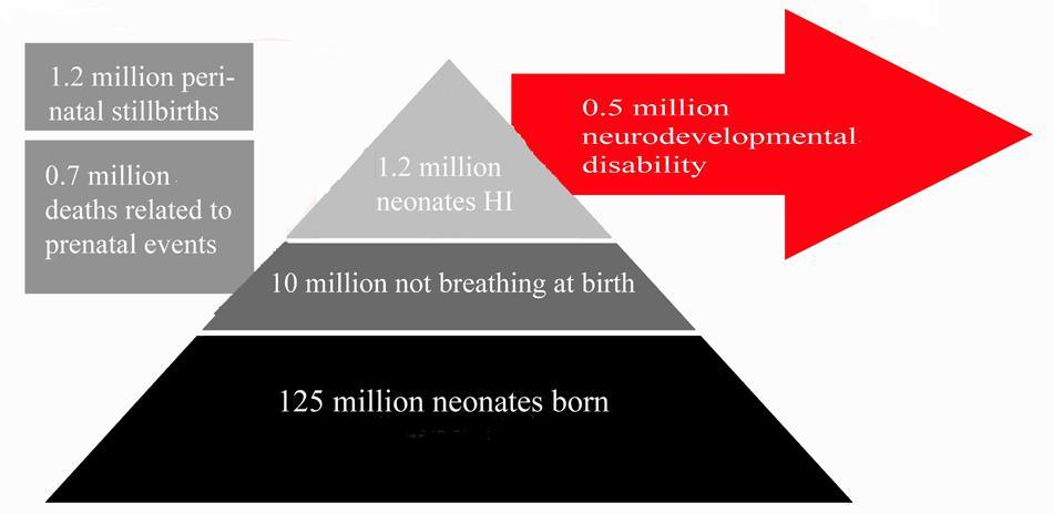 Frontiers   Neonatal Hypoxia Ischaemia: Mechanisms, Models